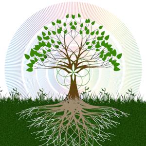 tree+rings+seed